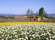 お花畑の風景
