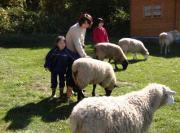 ふれあい牧場の羊たち