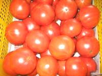 もぎたてトマト
